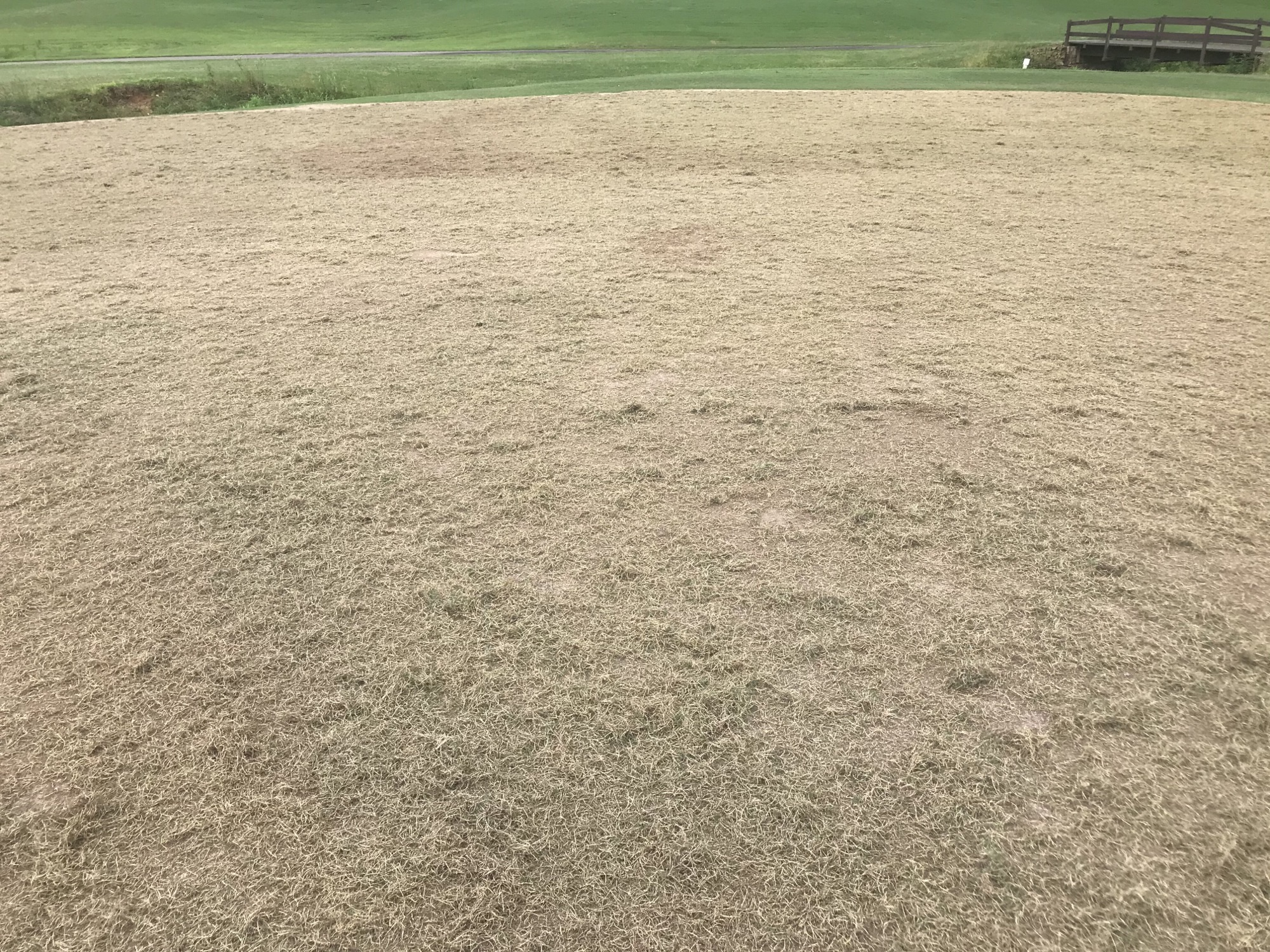 Apple Valley greens with new sprigs